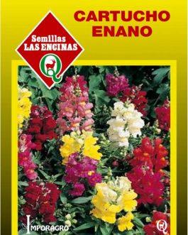 Semillas de Cartucho Enano