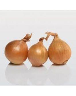 Cebolla Golden