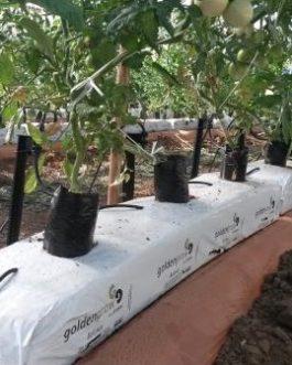 Fibra De Coco Bolsa De Cultivo 100 X 18 X 12 Cm 21,6 Lts
