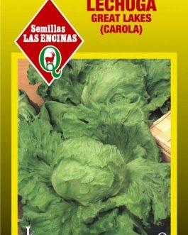 Semillas de Lechuga Escarola