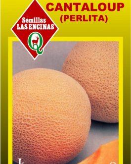 Semillas de Melón Cantaloup Perlita
