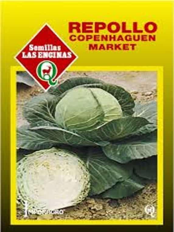 Repollo Copenhagen Market