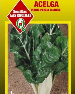 Semillas de Acelga Verde