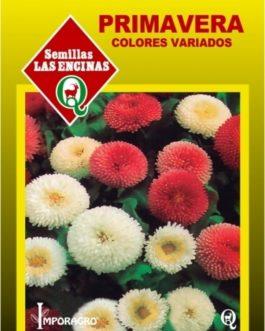 Primavera Colores Variados