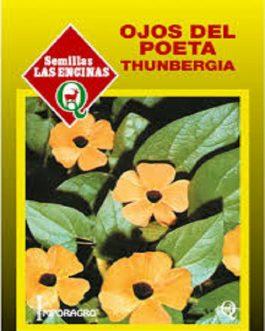 Thumbergia Alta (Ojos del Poeta)