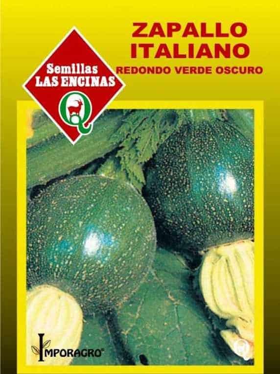 Zapallito Italiano, Redondo, Bola 8
