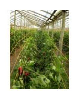 Malla Entutorado Flores 5 Cuadros 0,75 Mts X 1000 Mt Naranja