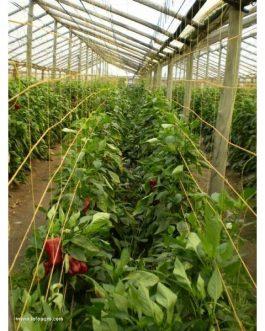 Malla Entutorado Flores 6 Cuadros 0,90 Mts X 1000 Mt Naranja