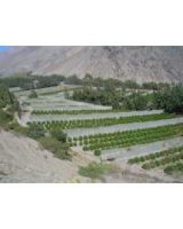 Malla Raschel Blanca 35% 4,20 Mts X 100 Mts Nacional