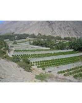 Malla Raschel Blanca 50% 4,20 Mts X 100 Mts Nacional