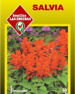 Semillas de Salvia Roja