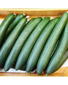 Pepino Marketmore 76 1000 Semillas