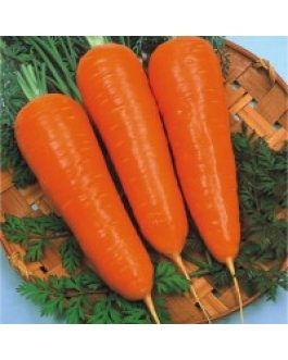 Zanahoria New Kuroda, Tipo Abaco, Granel 1 Kilo