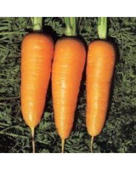 Zanahoria Chantenay 100 Grs