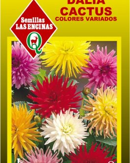 Semillas de Dalia Cactus