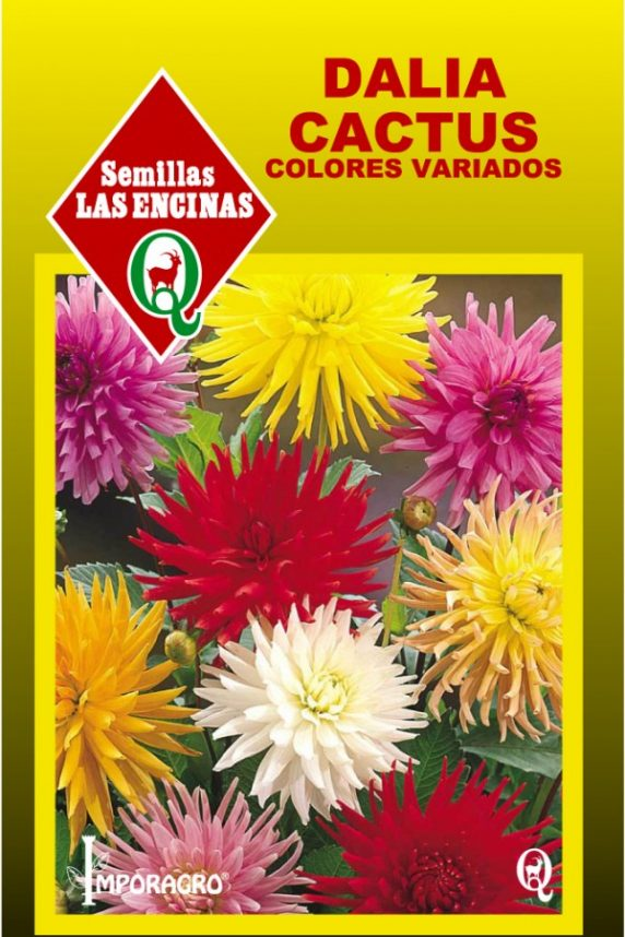 Dalia Cactus