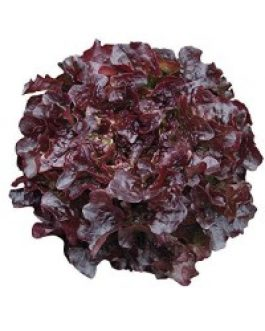 Lechuga Red Salad Bowl, Hoja De Roble, Morada 100 Grs