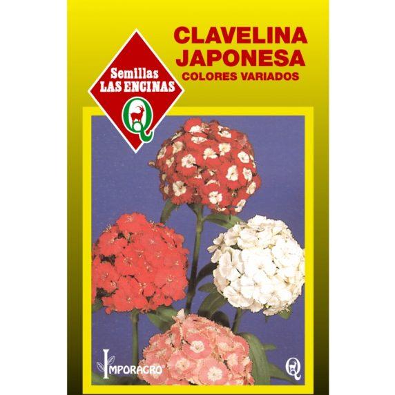 Semillas de Clavelina Japonesa en Sobre