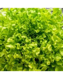 Lechuga Salad Bowl 300 Grs