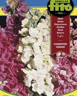 Fitó Flores Alhelí Cuarenteno Variado
