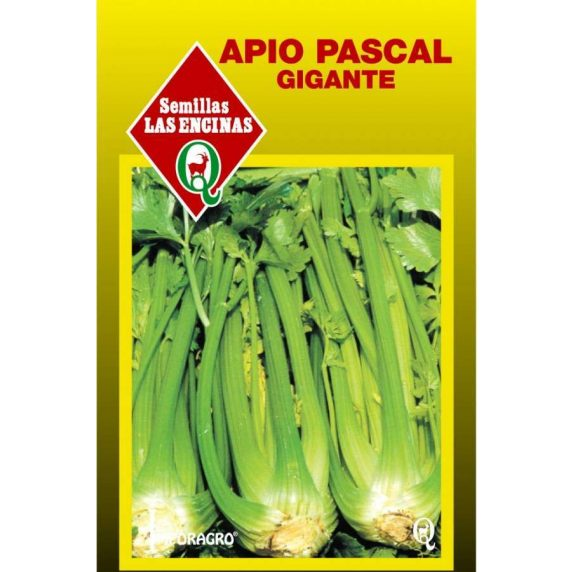 Apio Pascal