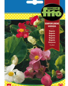 Fitó Flores Begonia Semperflorens Variada