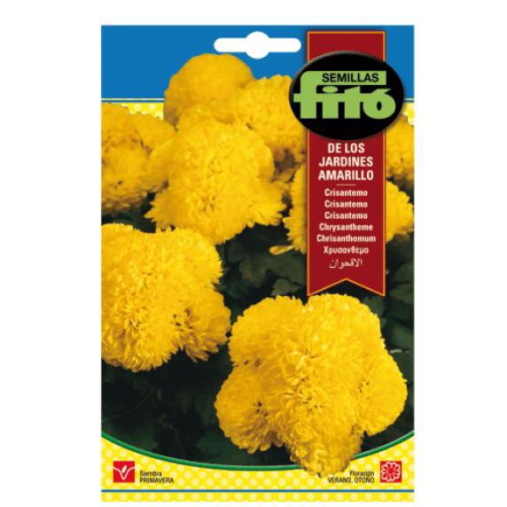 Fitó Flores Crisantemo de los Jardines Amarillo