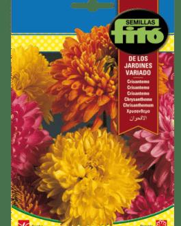 Fitó Flores Crisantemo de los Jardines Variado