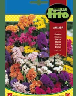 Fitó Flores Estatice Variada