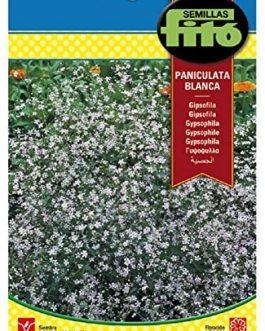 Fitó Flores Perniculata Blanca