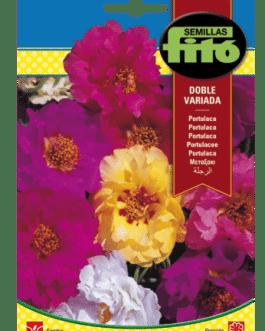 Fitó Flores Portulaca Doble Variada