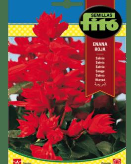 Fitó Flores Salvia Enana Roja