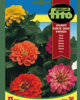 Fitó Flores Zinia Gigante Flor de Dalia Variada