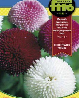 Fitó Flores Margarita de los Prados Variada