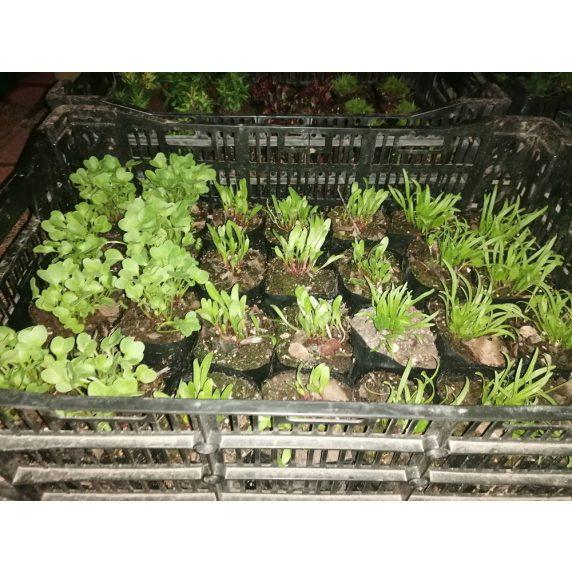 Plantas Huertos Alma