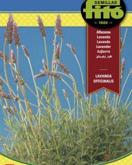 Semillas Fitó de Lavanda Officinalis