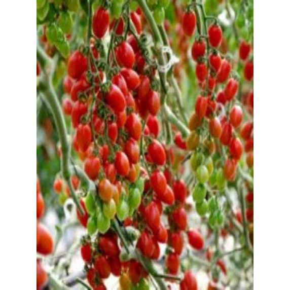 Tomate Cherry Perita Huertos Alma