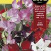 Fitó Flores Guisante De Olor Enano Variado