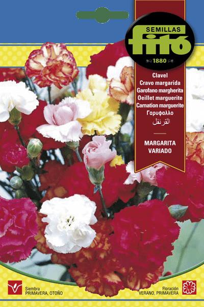 Fitó Flores Margarita Variada