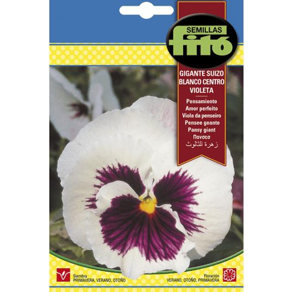 Fitó Flores Pensamiento Gigante Suizo Blanco Centro Violeta