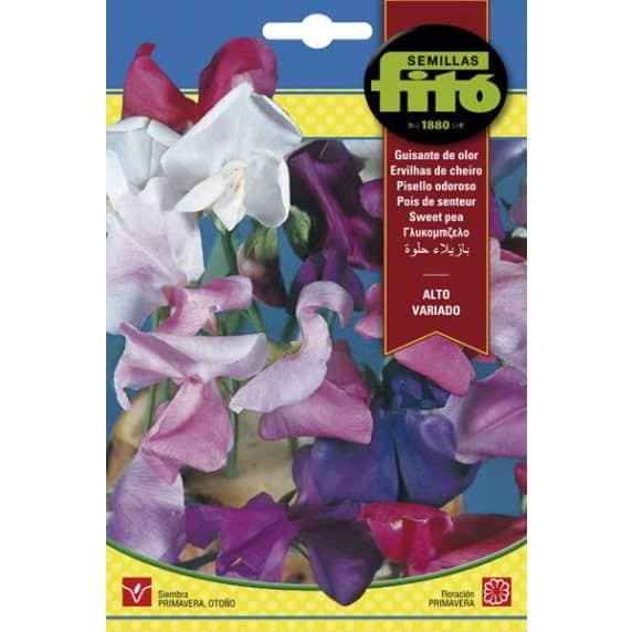Fitó Flores Guisante De Olor Alto Variado