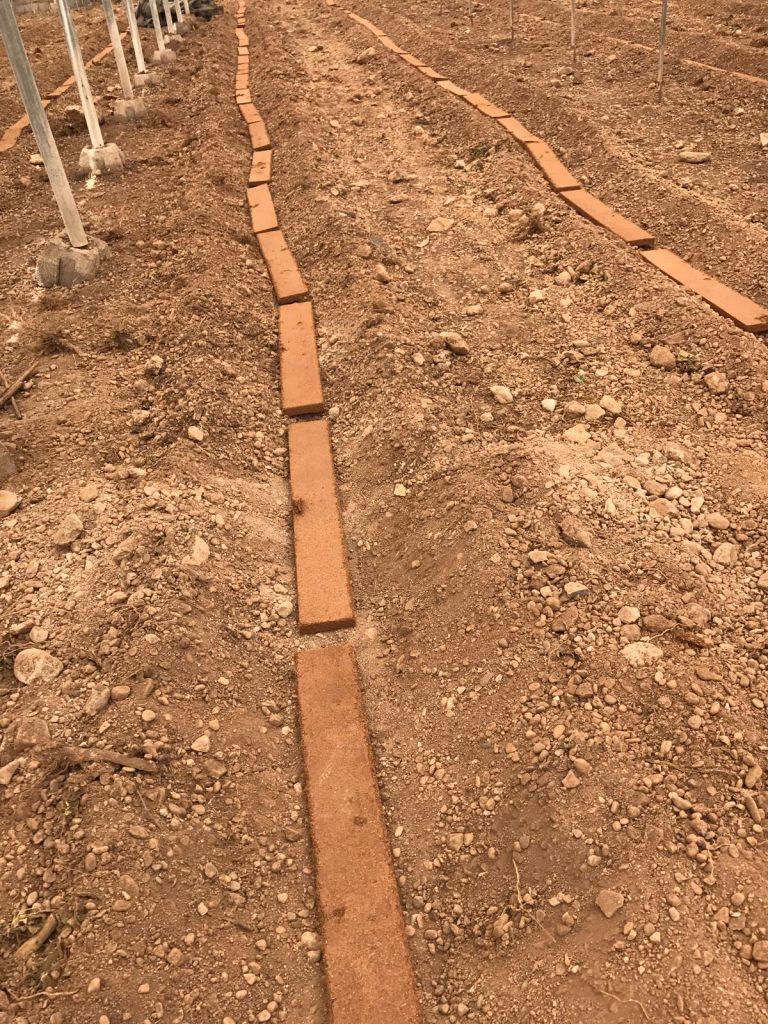 El sistema Mejorante de Suelos Agrícolas con Fibra de Coco