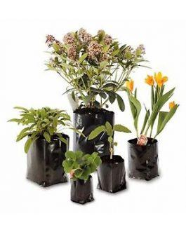 Bolsa Plástica para Almácigo y Plantas