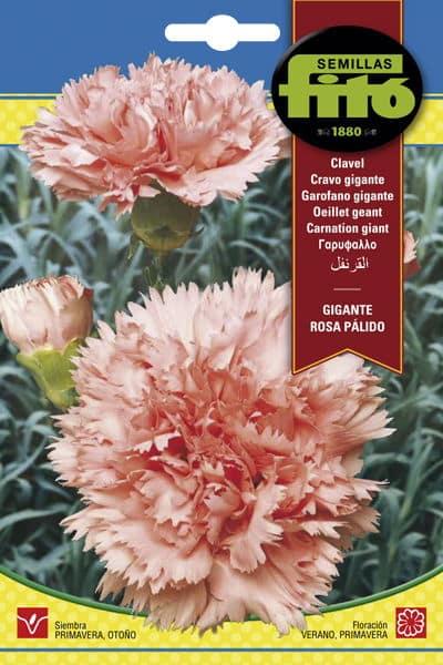 Fitó Flores Clavel Gigante Rosa Pálido