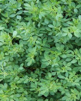 Semilla Alfalfa Cuf 101 25 Kilos