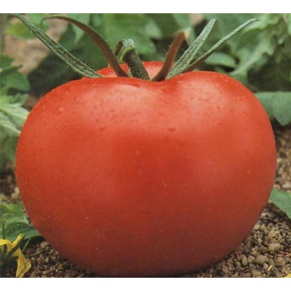 Semillas de Tomate Cal Ace Huertos Alma