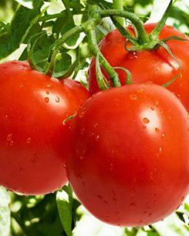 Semillas de Tomate indeterminado Agora F-1 Lata de 50 Grs