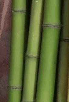 Tutor de Colihue para Plantas de 1.5 mts