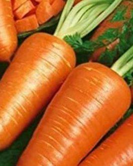 Semillas de Zanahoria Chantenay Red Cored 500 Grs