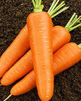 Semillas de Zanahoria Nantesa Improved 500 Grs
